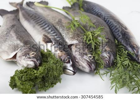 Fresh trout on white ground - stock photo