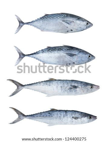 Fresh tuna fish collection isolated on white background - stock photo