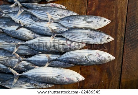 fresh tuna fishes on the table in fish market - stock photo