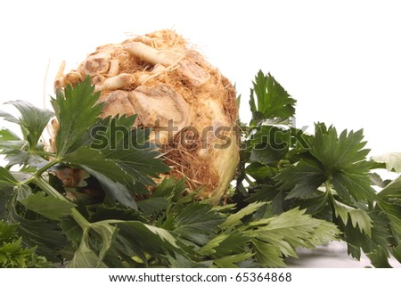 Fresh turnip-rooted celery against a white background - stock photo