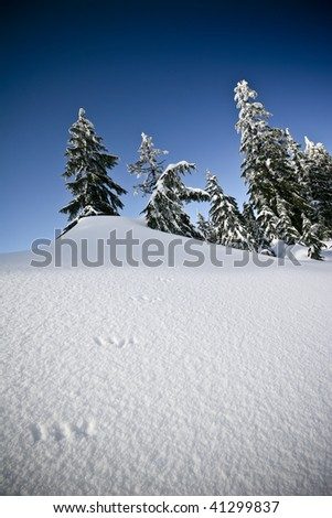 Fresh Vancouver snow scene with graduated filter effect - stock photo