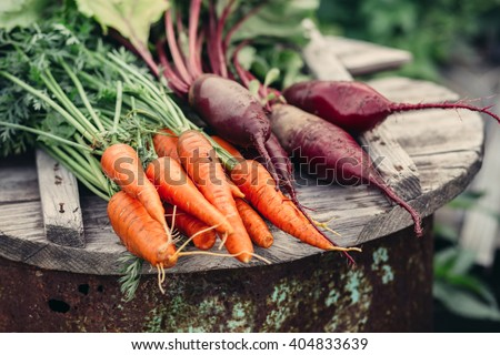 Fresh vegetables, carrots and beets.  Without Genetically modified food. Healthy food. - stock photo