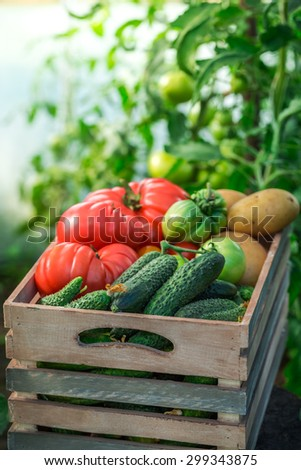 Fresh vegetables to groceries - stock photo