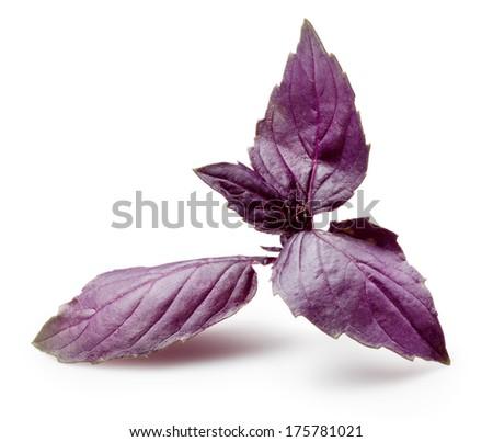 Fresh violet basil isolated on white. - stock photo