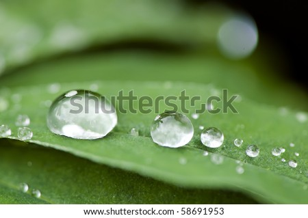 fresh water droplets on leaf close up as in after rain - stock photo