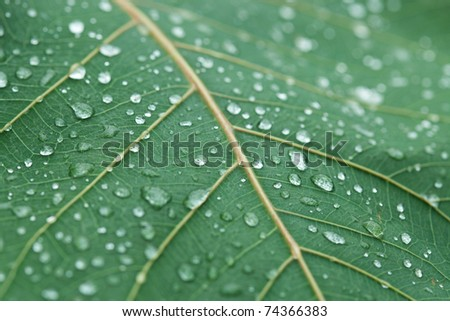 Fresh Water Drops on Green Leaf - stock photo