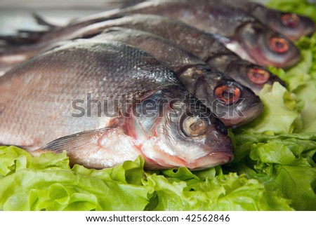 fresh-water fish close-up on green lettuce