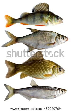 fresh-water fish, perch, bream, crucian, bleak - stock photo