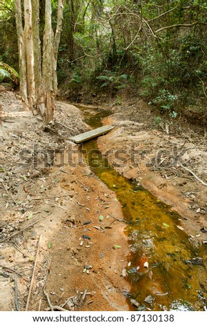 Fresh water stream in the forest