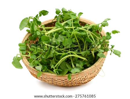 fresh watercress vegetables in basket isolated on white  - stock photo