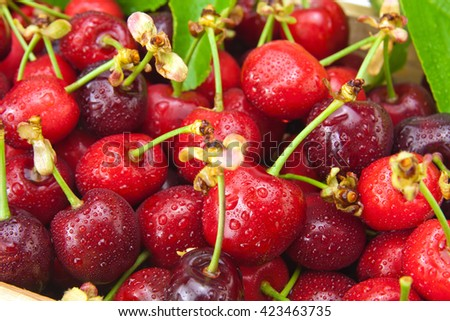 Fresh wet cherries isolated on white background - stock photo