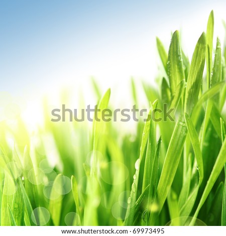 Fresh, wet, green spring and summer grass closeup with sun and blue sky. Very shallow DOF. - stock photo