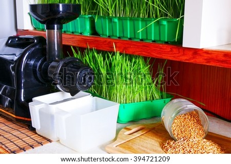 Fresh wheat grass ready for the juicer  - stock photo