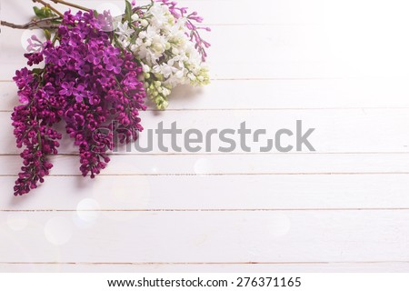 Fresh white and violet lilac flowers  in ray of light on white painted wooden planks. Selective focus. Place for text. - stock photo