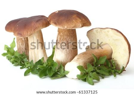 fresh white mushrooms (Boletus edulis) - stock photo