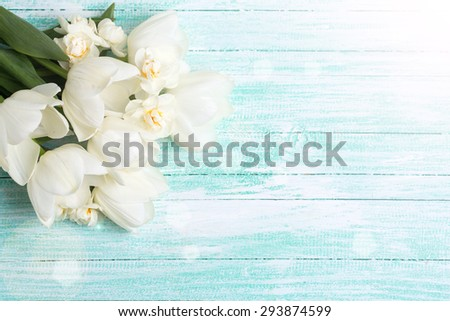 Fresh white tulips and daffodils in ray of light  on turquoise painted planks. Selective focus. Place for text. - stock photo
