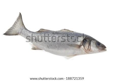 Fresh whole sea-bass isolated on white  - stock photo