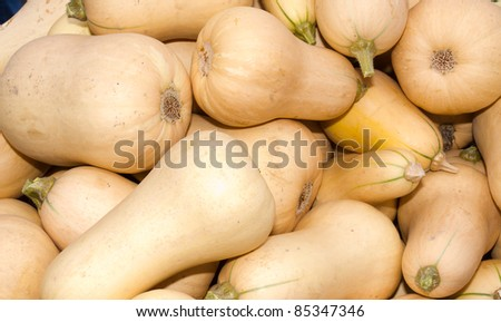 Fresh winter squash or butternut squash on display at the farmers market - stock photo