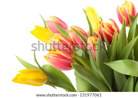 Fresh yellow and pink tulips isolated on white background - stock photo