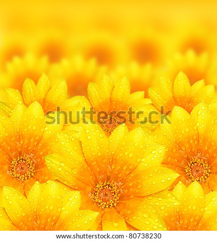 Fresh yellow flower background with dew props, beautiful nature concept