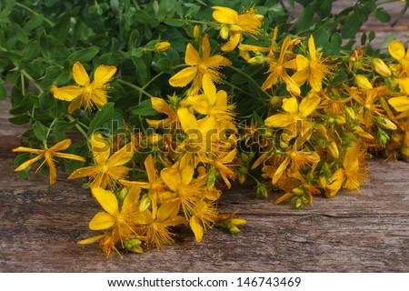 fresh yellow flowers Hypericum on the old table close-up - stock photo