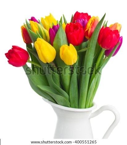 fresh yellow, purple and red  tulips in pot close up isolated on white background