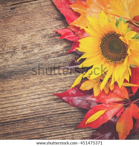 fresh yellow sunflower and fall leaves on wooden background, retro toned - stock photo