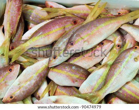 Fresh Yellow tail snapper, Ocyurus chrysurus, at the market - stock photo