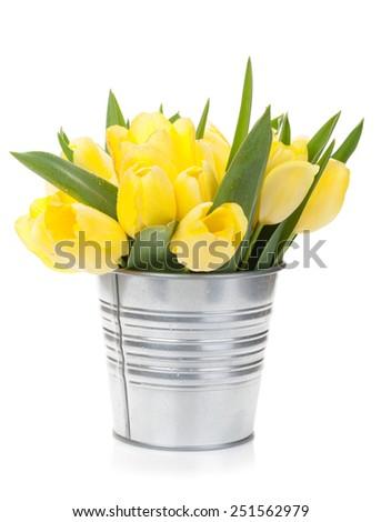 Fresh yellow tulips bouquet. Isolated on white background - stock photo