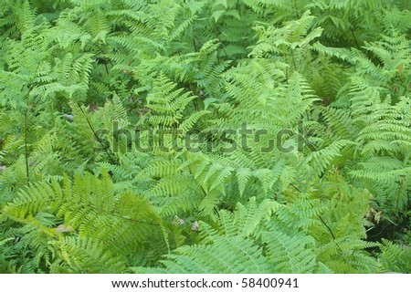 fresh young bright green fern background texture
