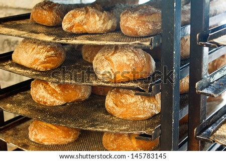 Freshly baked artisanal rustic bread loafs on battered bakers trays - stock photo