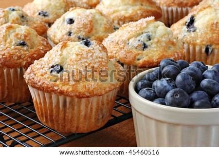 Freshly baked blueberry muffins on cooling rack with dish of blueberries.  Macro with shallow dof. - stock photo