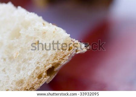 Freshly baked french baguette in strong macro to emphasize the texture.