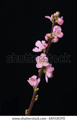 Freshly bloomed spring flowers on black - stock photo