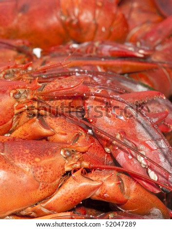 Freshly boiled lobster on a white plate with crackers with a glass of wine and a napkin on a granite counter - stock photo