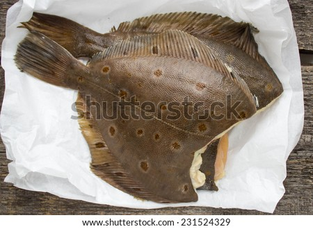 freshly caught flounder on white paper