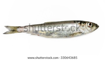 Freshly caught herring before cooking on a white background