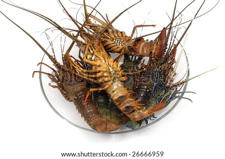 Freshly caught lobsters on the dish - stock photo