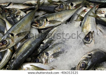 Freshly caught mackerel stored on ice in preparation to be sold at a fish market or processed at a fish factory. - stock photo