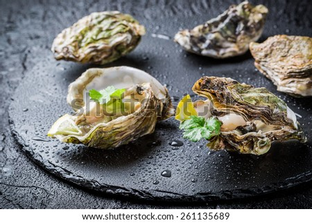 Freshly caught oyster in shell on black rock - stock photo