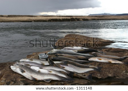 freshly caught salmon and trout at the riverbank