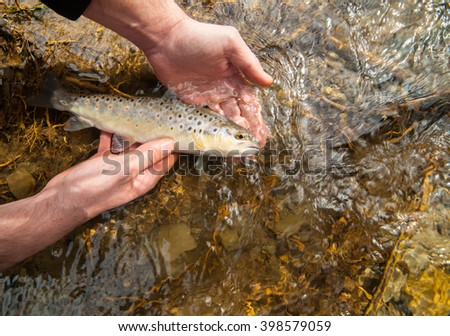 Freshly caught small brown trout (Salmo trutta fario) held in fisherman's hands before releasing it in a clean stream. - stock photo
