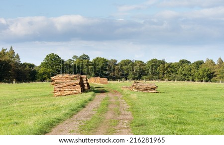 Freshly chopped logs on stockpile Great for industrial background - stock photo