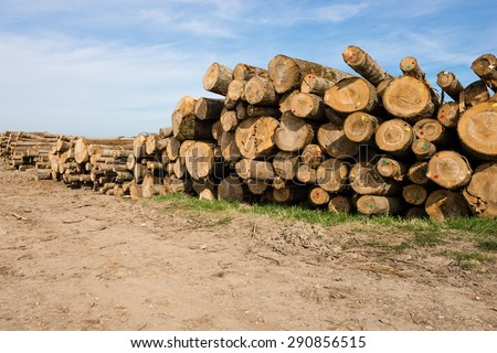 Freshly chopped tree logs stacked neatly on top of each other in a pile. Selective focus - stock photo