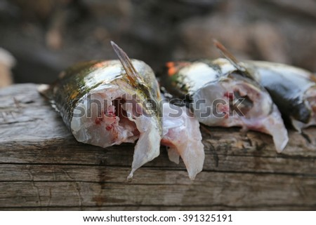 Freshly cleaned Largemouth Bass (Micropterus salmoides).  - stock photo