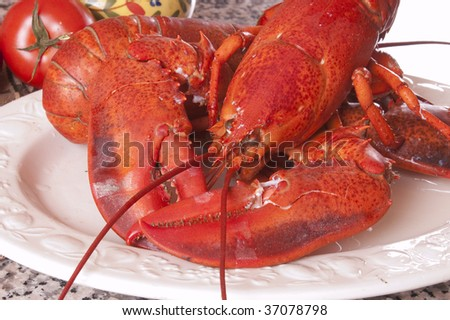Freshly cooked Lobster from Gloucester - stock photo