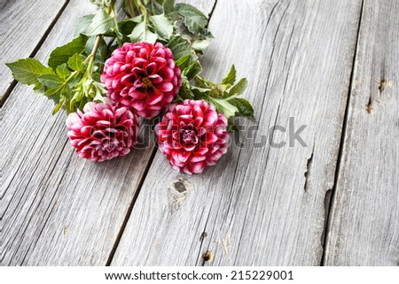 Freshly cut asters on wooden background. - stock photo