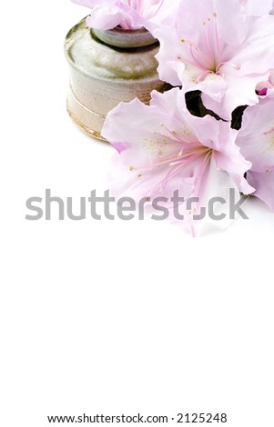 Freshly cut Azalea flowers against a handmade ceramic pot. Lots of white layout space. - stock photo