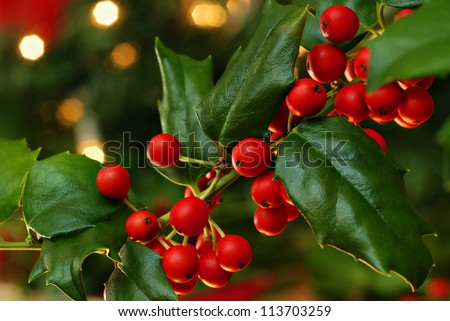 Freshly cut holly branch as holiday decor with defocused christmas tree and lights in background.  Macro with shallow dof. - stock photo