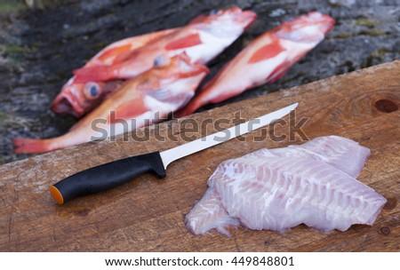 Freshly cut Rose fish (Sebastes norvegicus, prev. Sebastes marinus) fillet at cutting board outdoors, four fish on background.  - stock photo